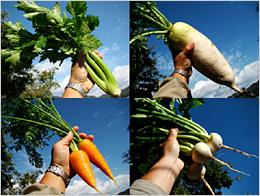 大切に育てられた野菜たち